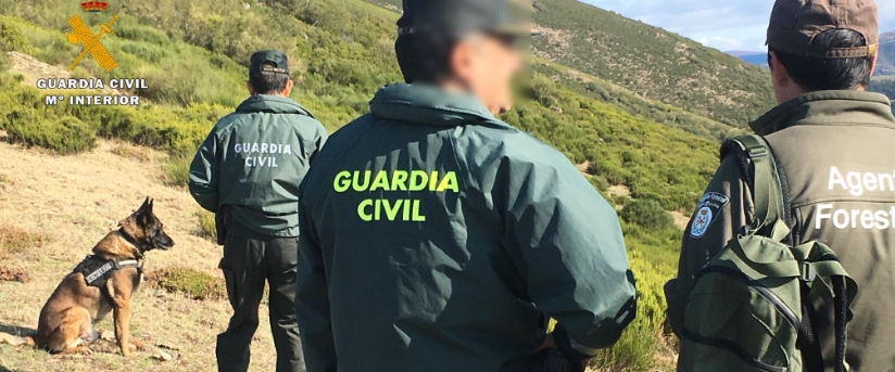 Perro Guardia Civil